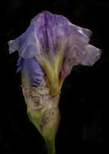 iris-i_large_image